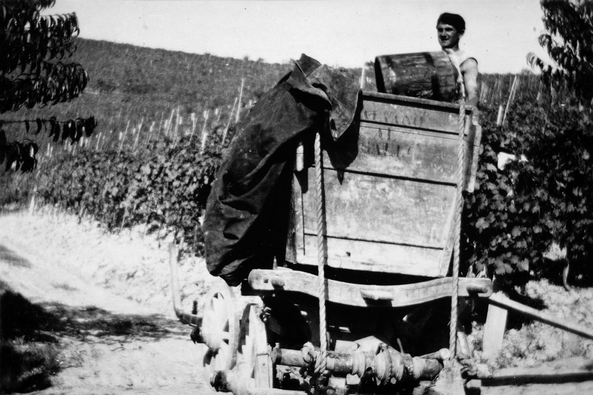 Historical image of work in the vineyard